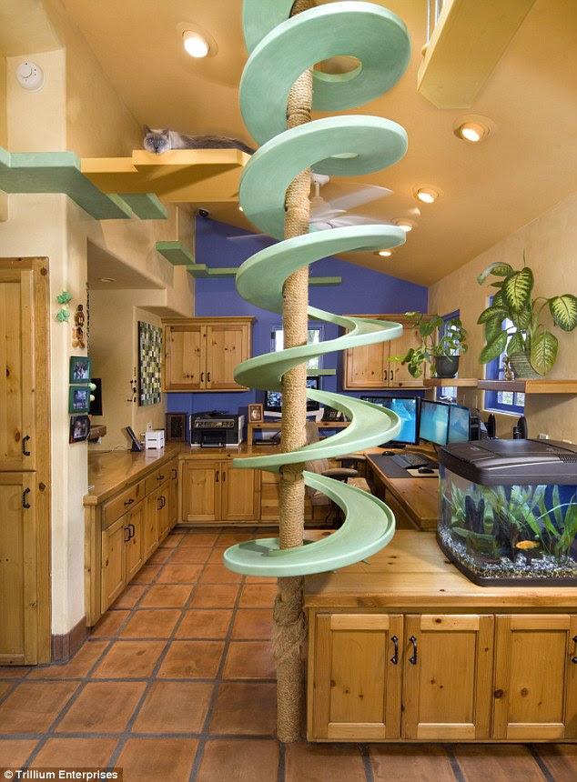 Mengubah rumah menjadi surga kucing !