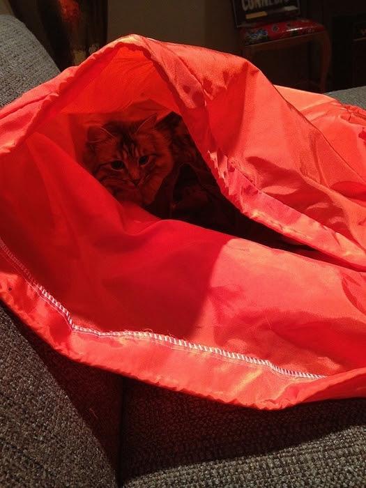 hidingcats18 (525x700, 280Kb)