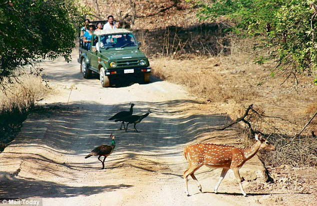 There are thousands who swear by the lion in the Saurashtra region, where the king has by now acquired a territory of 20,000  square km