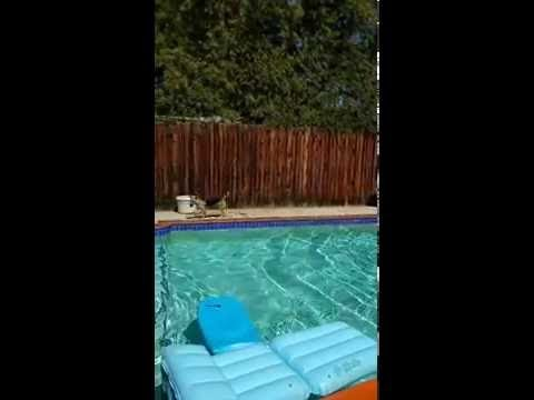 Dog 'Saves' Her Human When She Thinks He's Drowning