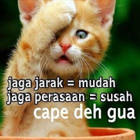 Dp Wa Kucing Lucu