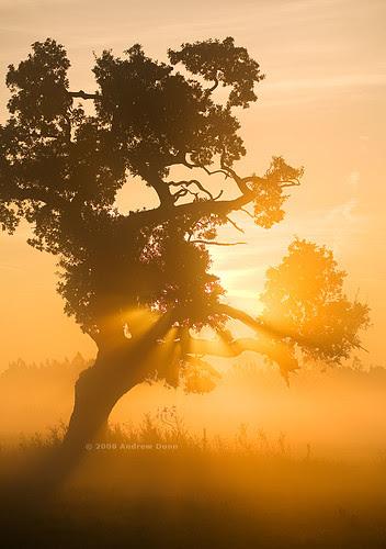 Blazing Oak por . Andrew Dunn .