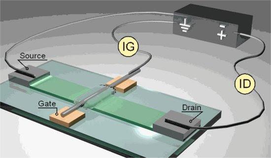 Sinapse eletrônica de gelatina rumo aos computadores vivos