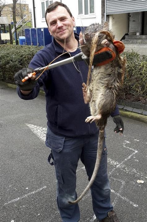 Giant rat found in London: Expert casts doubt on ?four foot rodent the size of a child? claim