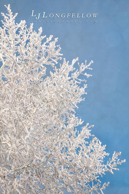 Winter Aspen (2/365 - 2 days late due to illness)
