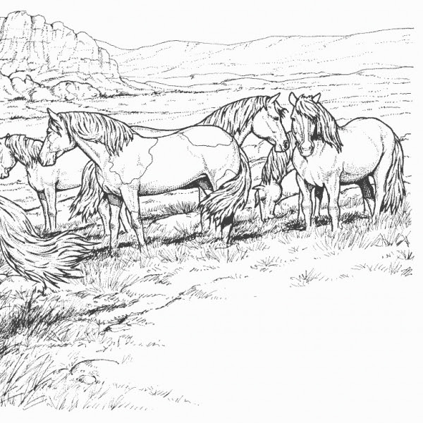 Disegni Da Colorare Di Cavalli Selvaggi.Disegni Da Colorare Cavalli Selvaggi Coloradisegni