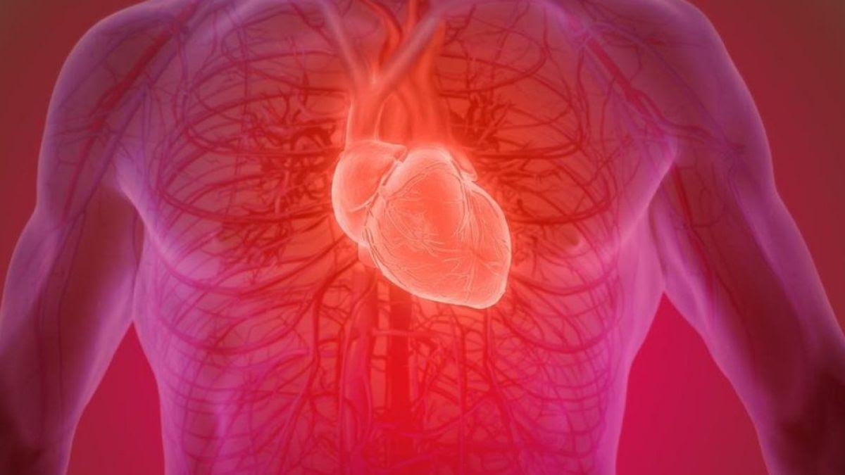 Es Posible Recuperar Un Corazón Humano Después De Muerto Tele 13