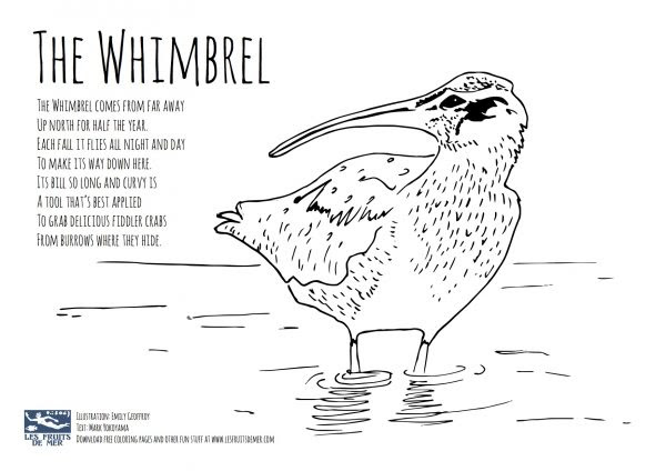 80 Top Shore Bird Coloring Pages Download Free Images