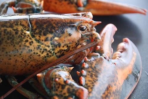 lobster live close