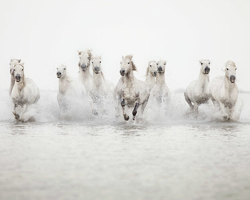 The power of 10 - Horse Photograph por IrenaS