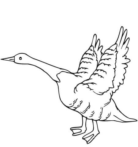 Dibujo De Ganso Se Hecha A Volar Para Colorear Dibujos Para
