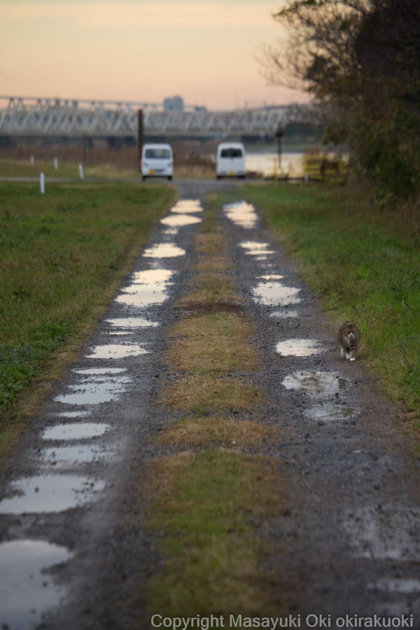 黙々と歩く 猫写真家沖 昌之のブログ 野良ねこちゃんねる