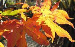 painted warp leaves2 Nov 08