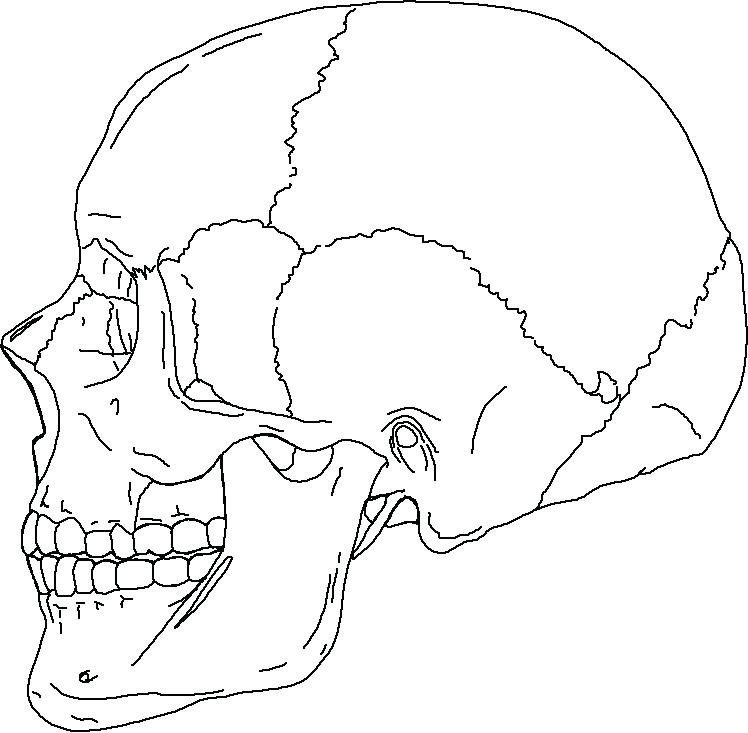 Axial Skeleton Coloring Pages at GetColorings.com | Free ...