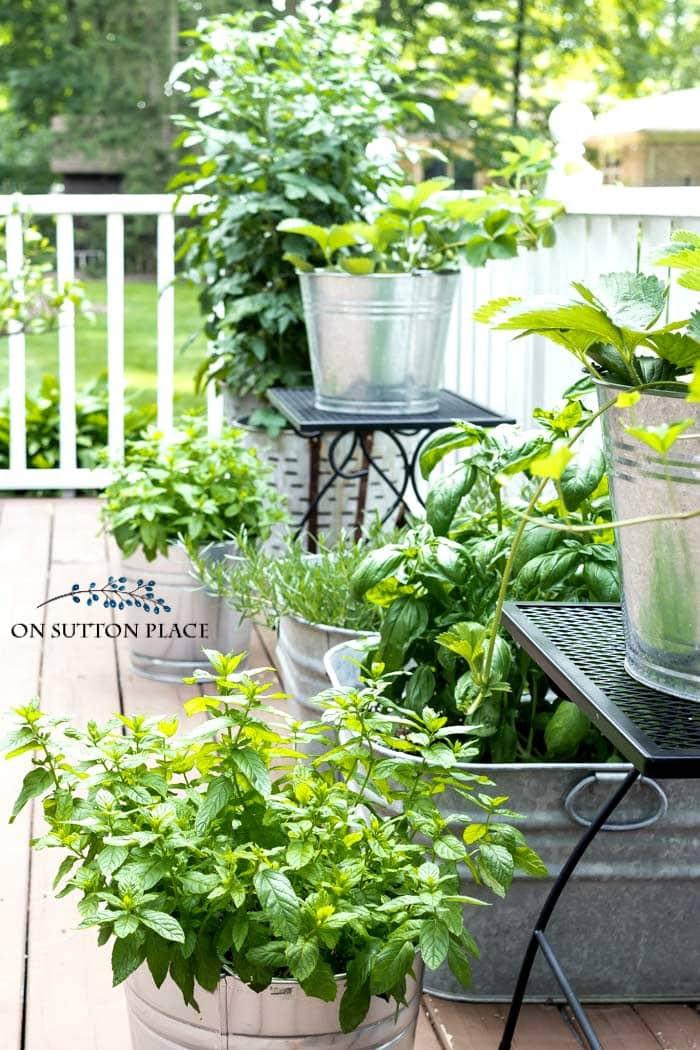 on sutton place midsummer herb garden