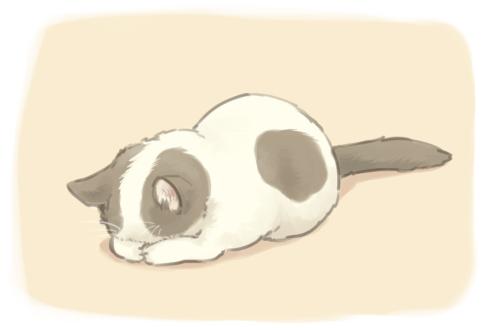 cat, kitten, cute, sleeping