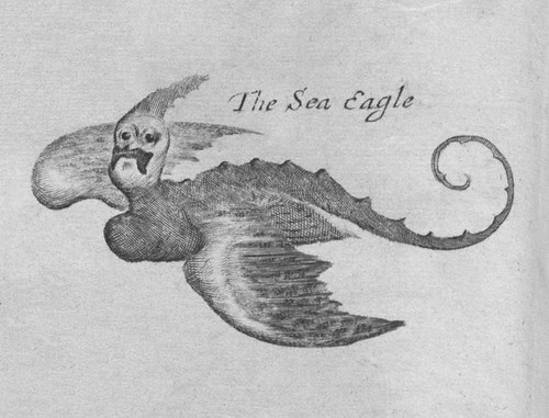Sea-Eagle -- Johannes Nieuhof