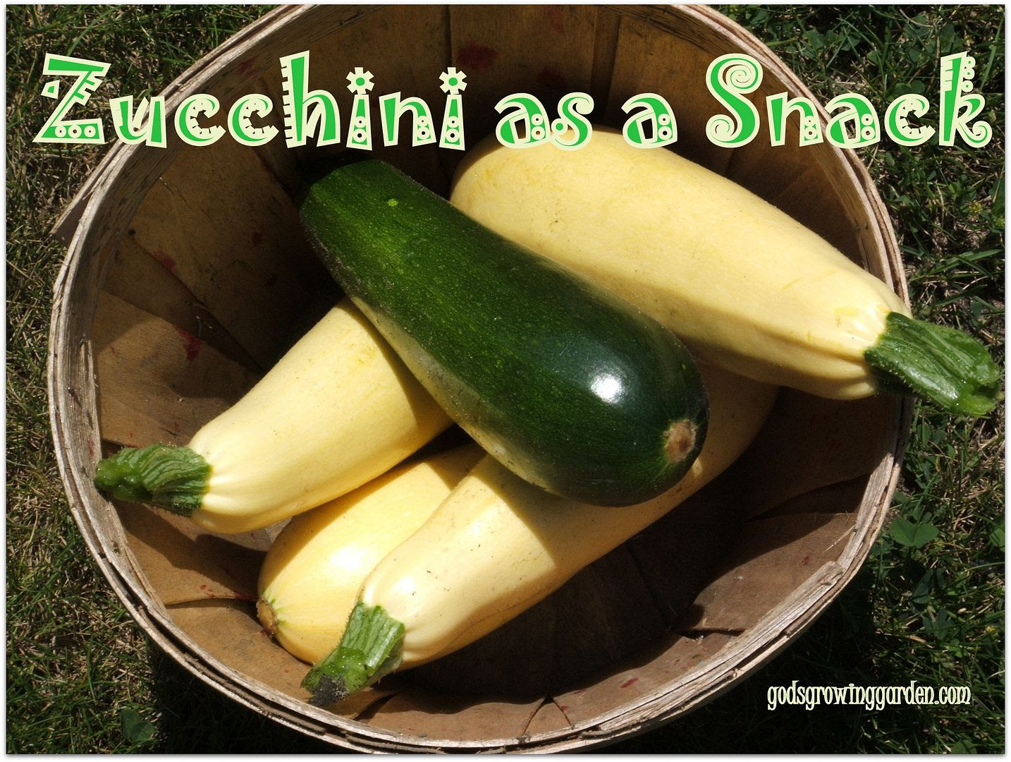 Zucchini by Angie Ouellette-Tower for godsgrowinggarden.com photo 014_zpscea0a345.jpg