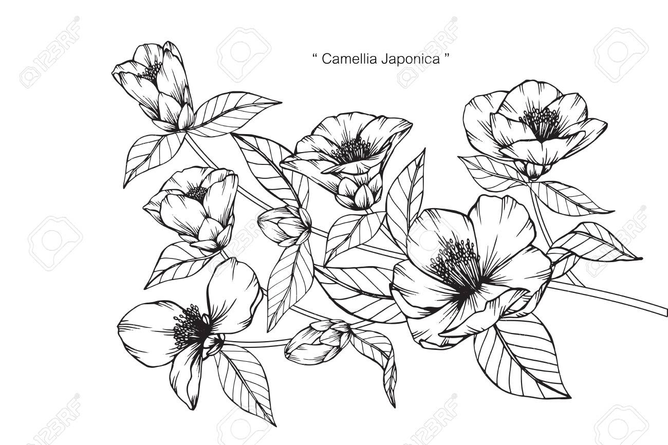 椿 イラスト 白黒