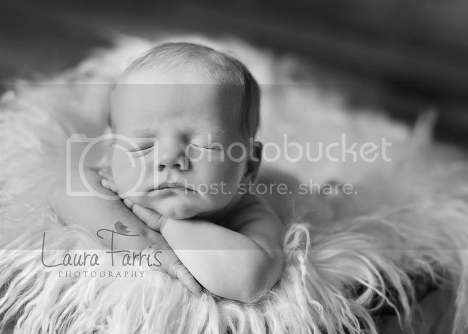 newborn photography boise
