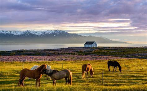 desktop wallpaper iceland landscape horse animals