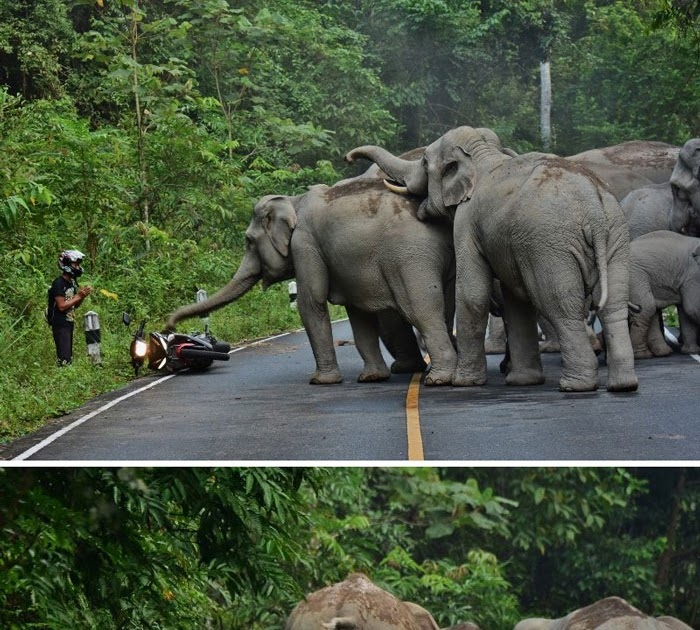 Trending Man Apologizes To Elephants After Disturbing Them With Motorbike In -2037