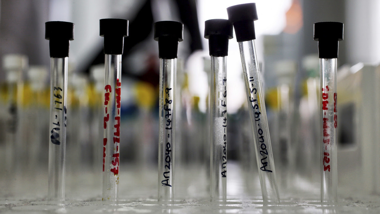 Sample analysis tubes are seen in a lab at the Institute of Cancer Research in Sutton. Image: ICR