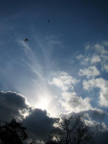 kites and poui trees