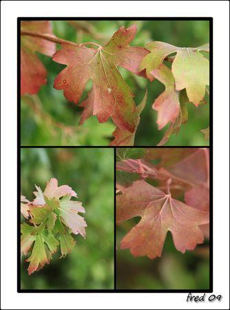 automne_sign_e