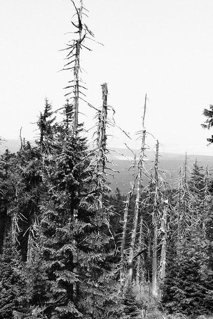 Waldsterben - saurer Regen - die Auswirkungen
