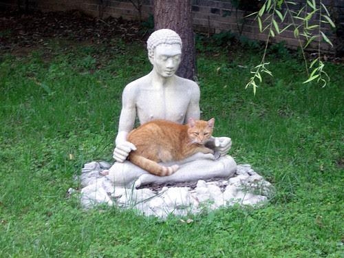 Cat & Buddha (Caochangdi, Beijing)