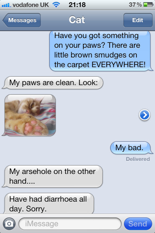 texts from cat