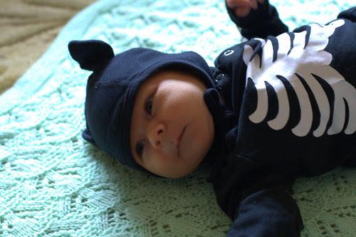 Cat skeleton baby