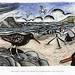 Where Do Birds Live? Oystercatchers