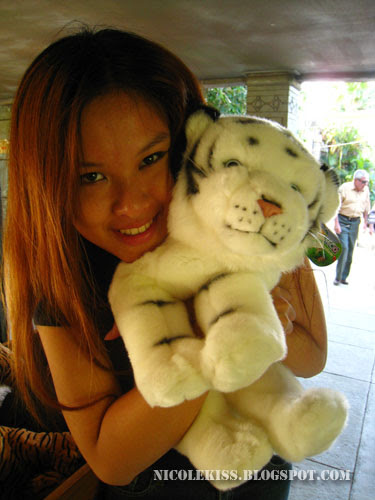 hugging white tiger