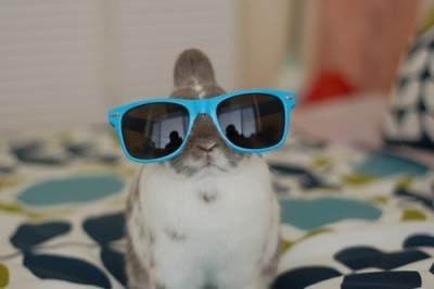 I'm the cool rabbit