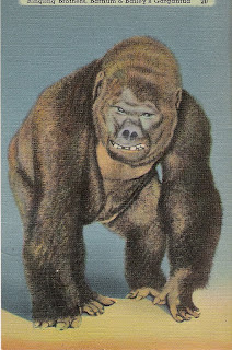 """""""Bushman at Lincoln Park Zoo and The Field Museum"""" by S.M ...  