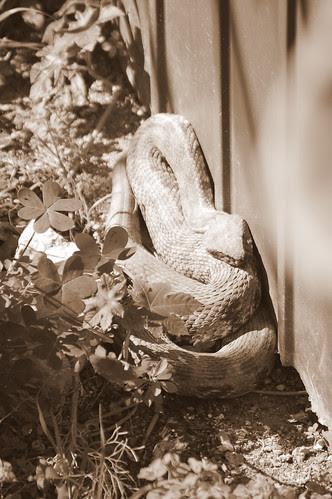 Paphos Snake Garden (1)