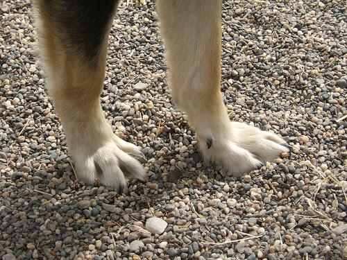 Tonzona's giant paws