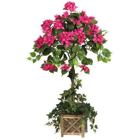 Pink Bougainvillea Topiary for Weddings, Churches & Home Decor