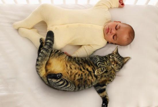 Αχώριστοι στη ζωή και στον ύπνο (3)