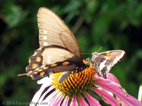 Attracting Pollinators 6