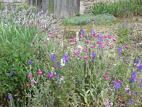 fleurs roses et violettes.jpg