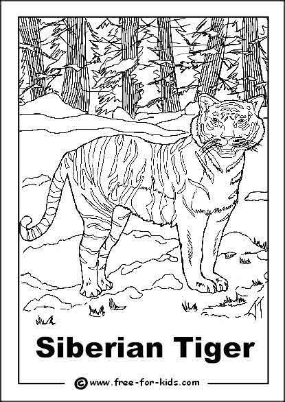 siberian tiger coloring  siberian tiger coloring