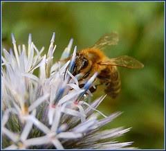 happy honey bee x 2