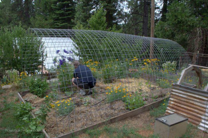 DIY Greenhouse from Hog Panels