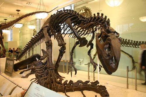 Allosaurus fragilis over Apatosaurus excelsus