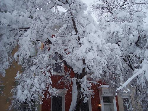 Tree on T Street