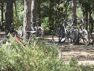vélos dans la pinède.jpg
