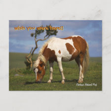 Pony And Lone Gorse postcards postcard